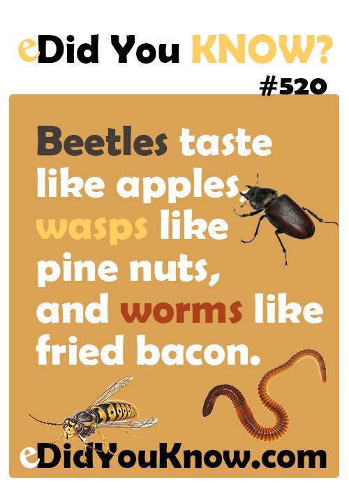 Image result for beetles taste like apples