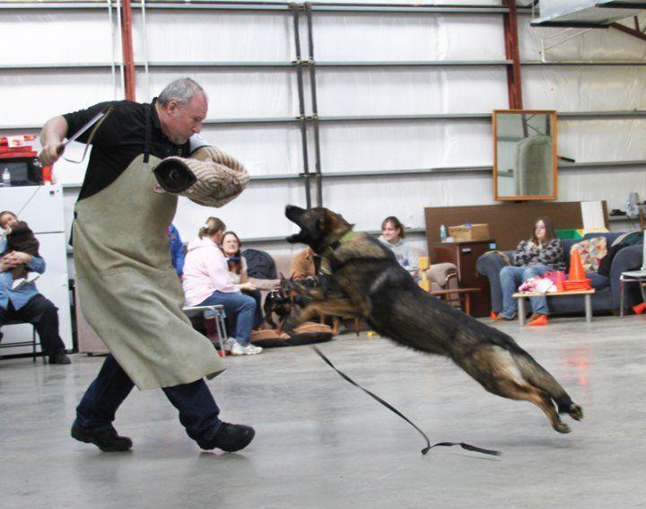 German Shepherd Personal Protection Training German Shepherd