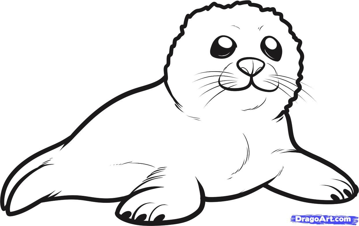 How To Draw A Seal Pup Seal Pup Step By Step Sea Animals Animals