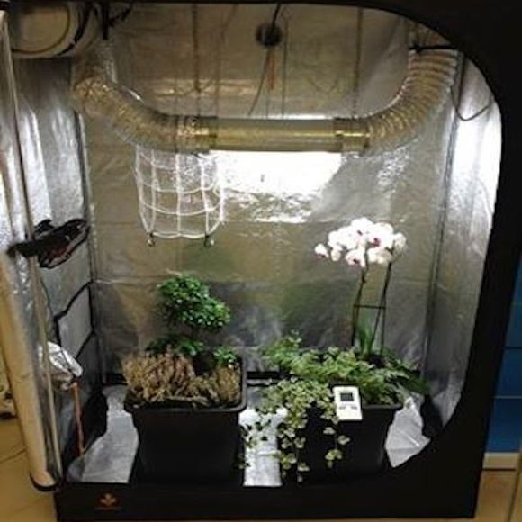 Grow Box Allestite Grow Box e Grow Room per la Coltivazione Indoor