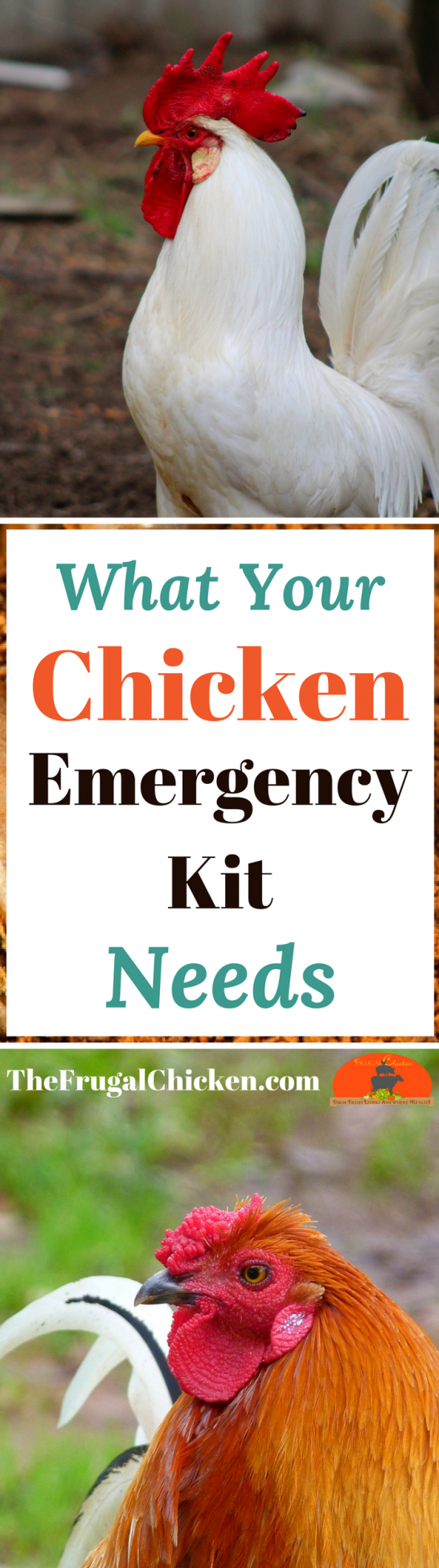 If you have chickens eventually they will need first aid ...