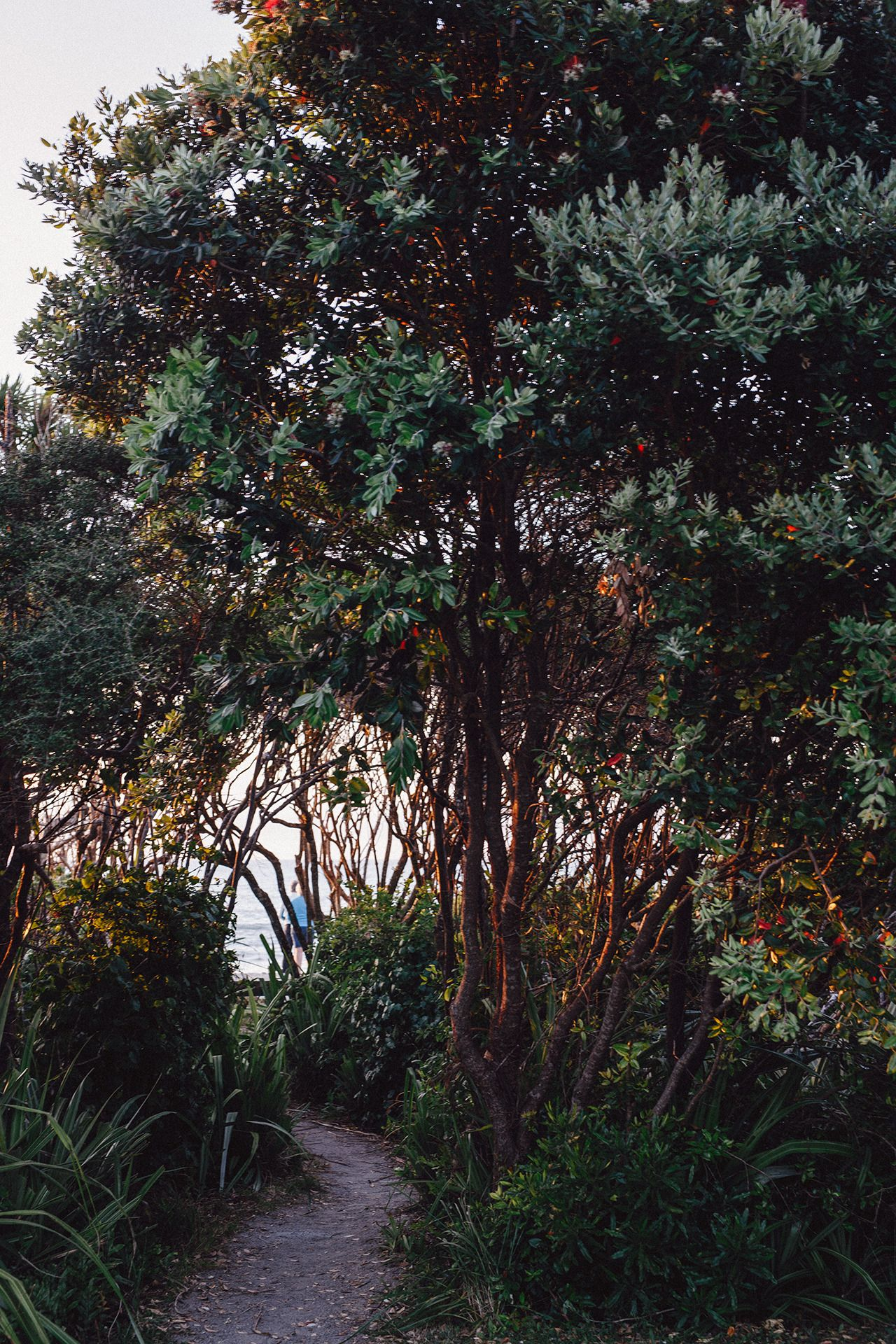 Enchanted walk to the beach…we slept only 100 m away from the oceanat punakaiki beach ... - #fotografie #neuseeland #new #on #pancake #photographers #punakaiki #roadtrip #rocks #Tumblr #vanlife #zealand