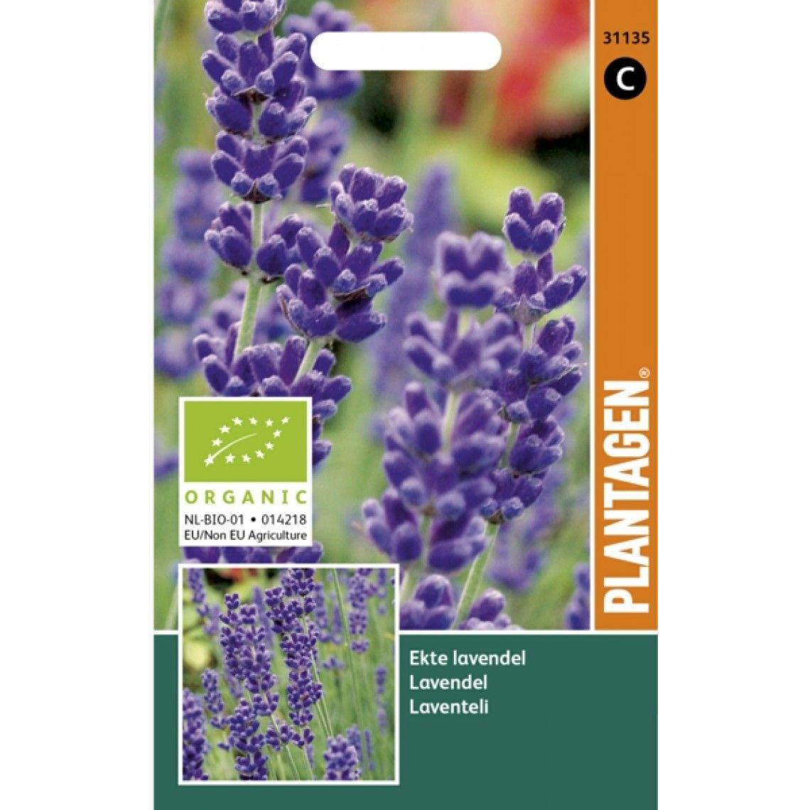 Frø organic ekte Lavendel
