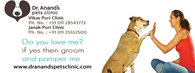 Pin On Pet Clinic