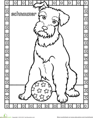 schnauzer coloring page schnauzer pinterest coloring pages