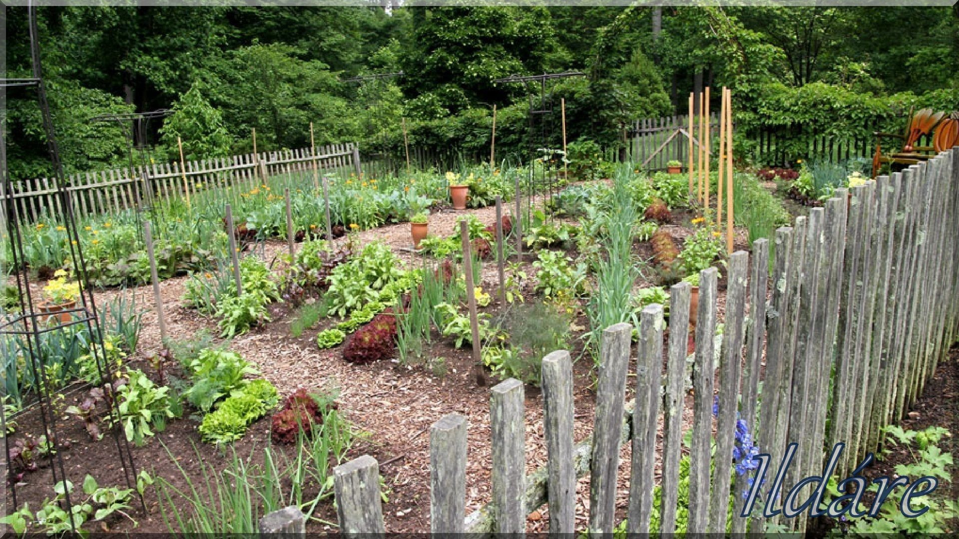 Vegetables Garden Vegetable Gardening Kitchen Rustic Fence Potager Gates Backyard Ideas French Country