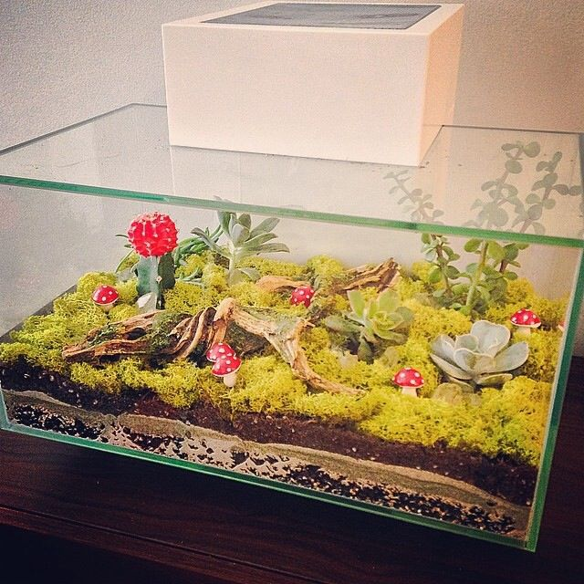 Create a hip looking terrarium from an old fish tank grab for Fish tank terrarium