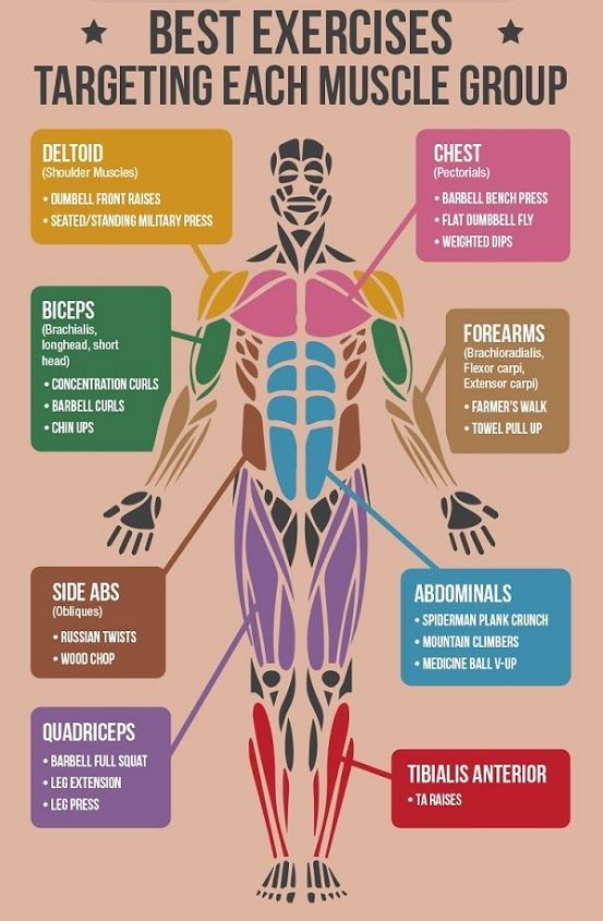 Best Exercises For Each Muscle Group Workout Plans Workouts
