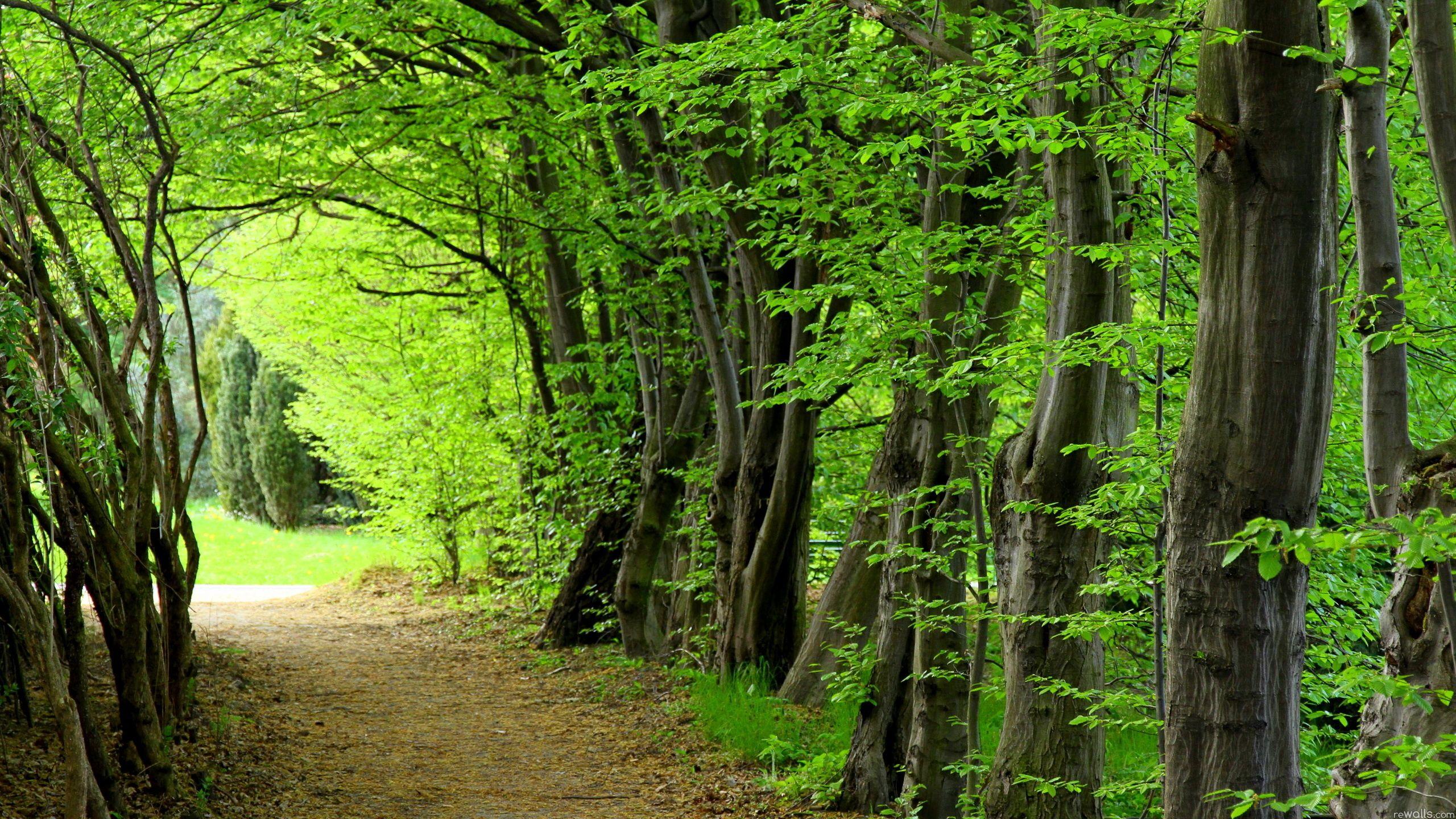 Rainforest Forest Green 2560x1440 nature rainforest