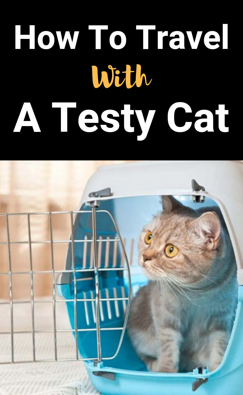 How to Get an Aggressive Cat into a Carrier Cats, Cat travel