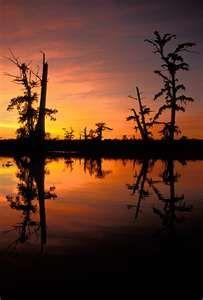Swamp at sunset