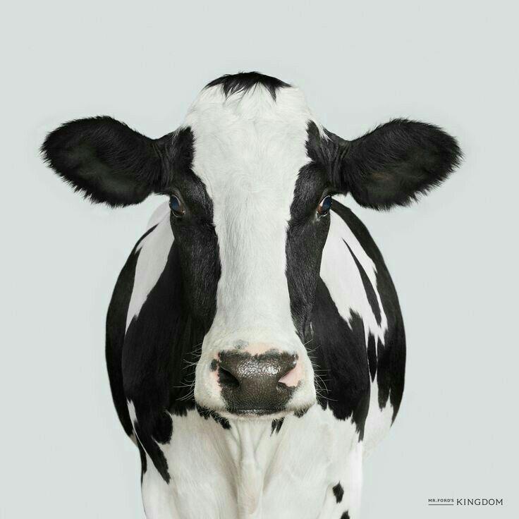 Pin de Fionastardust en Vaches   Pinterest   Vaca, Imprimibles y ...