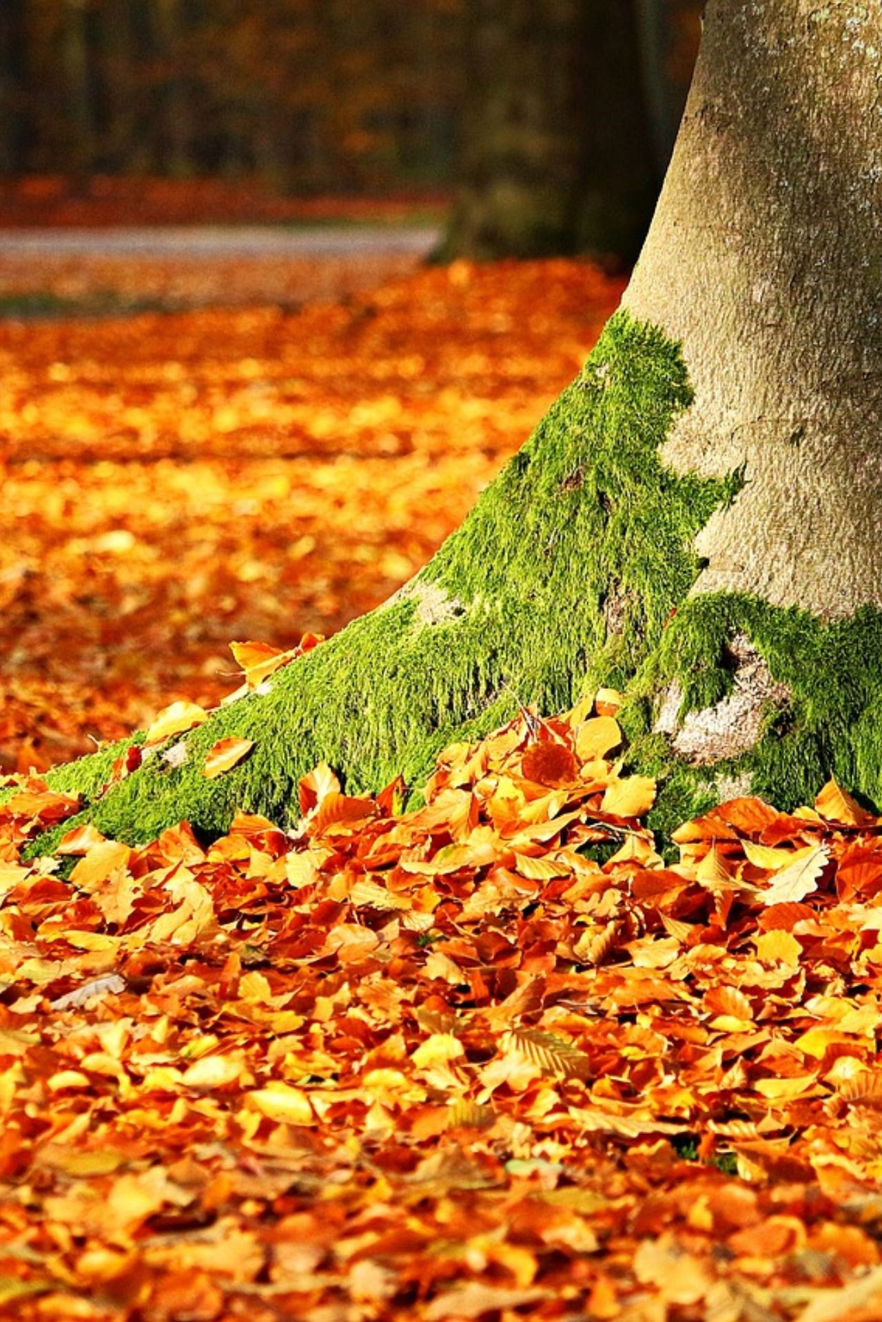 What To Do With Fall Leaves? | Android wallpaper fall ...