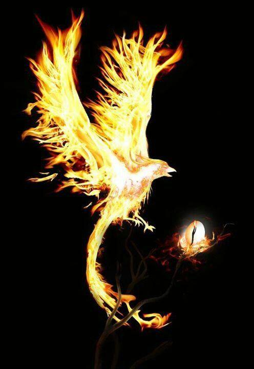Phoenix Renait De Ses Cendres : phoenix, renait, cendres, Terreneuvejesuis, Phoenix, Artwork,