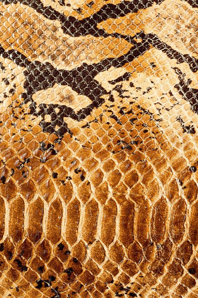 pin texture snake pictures reptiles skin pattern animals wallpaper on snake skin patterns and textures animals snake patterns and animal