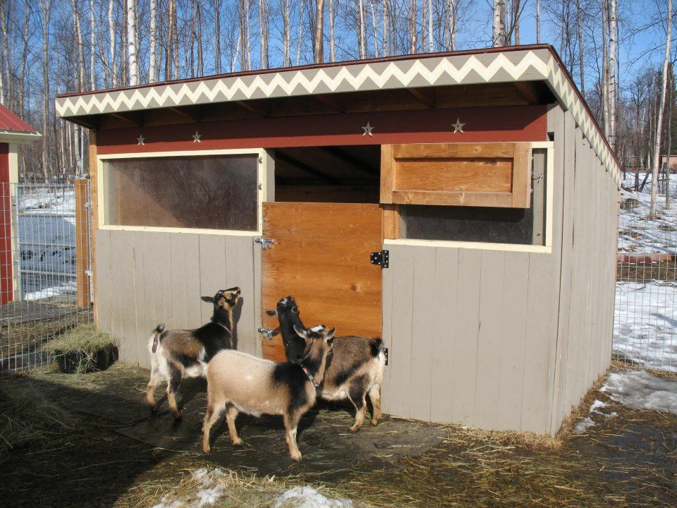 Goat Shelter 6' x 12' 2 4'x4'x10' pressure treated posts 2 4'x4'x8