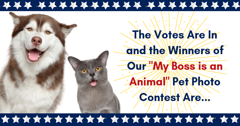 Winners of Our 'My Boss is an Animal' Pet Photo Contest