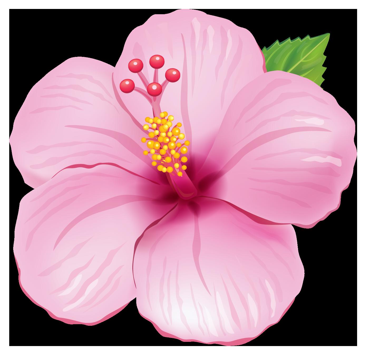 Pin By Diane Matthews On Flowers Pinterest Flowers Flower