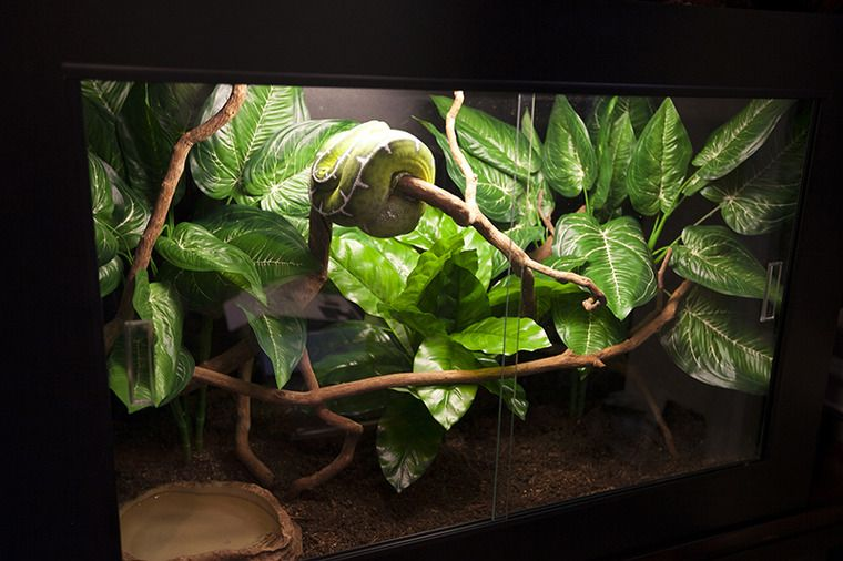 Arboreal Snake Enclosure Reptile Terrarium Decorations Decor