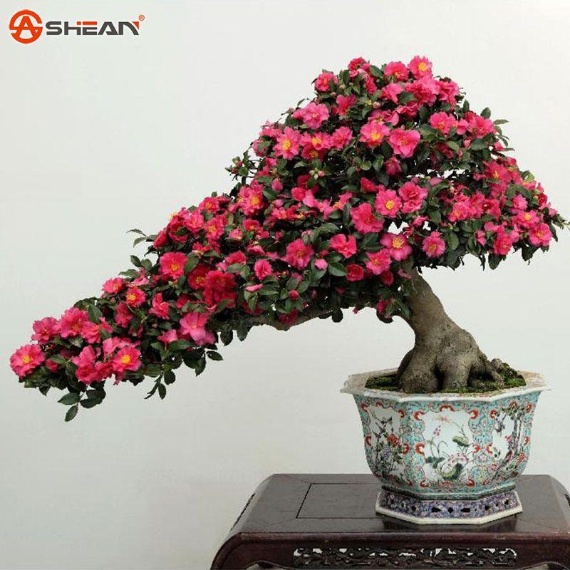 resultado de imagen para arboles bonsai con frutos | arboles