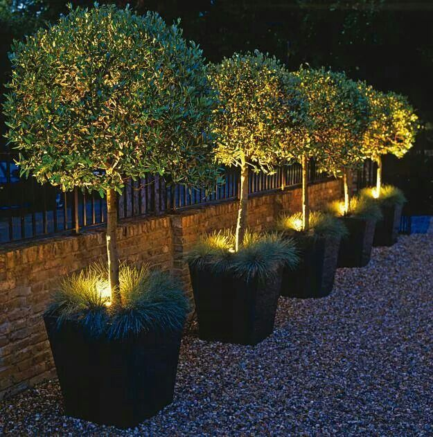 Trees in grassy pots with lights gardens pinterest lights potted olive tree lighting daylight saving time may bring an early nightfall but new lighting techniques and technology transform the great outdoors aloadofball Choice Image