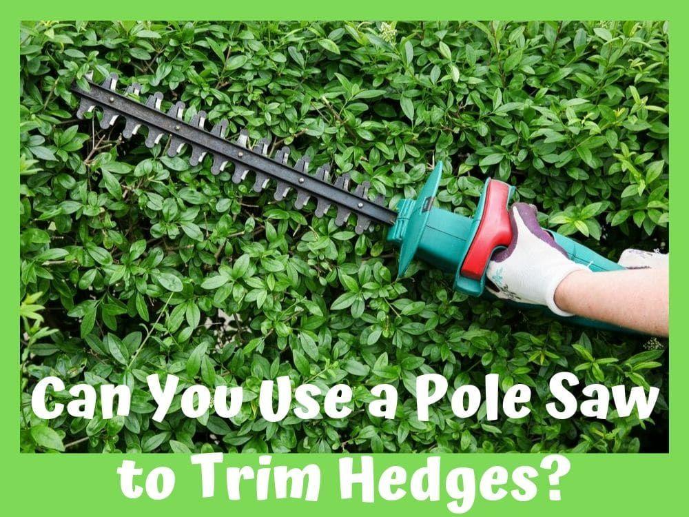 Can you use a pole saw to trim hedges
