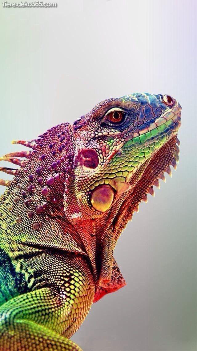 Bon  Gratuit  Reptiles para colorear  Astuces