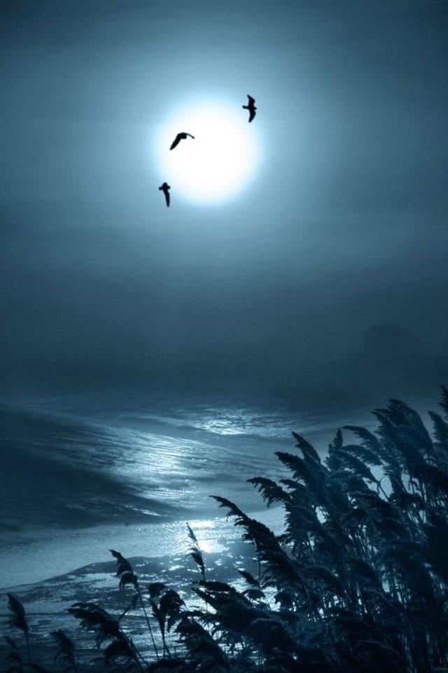 Los pájaros volando en la luz de la luna         17621_699569140166106_6466895610763909967_n.jpg (640×960)