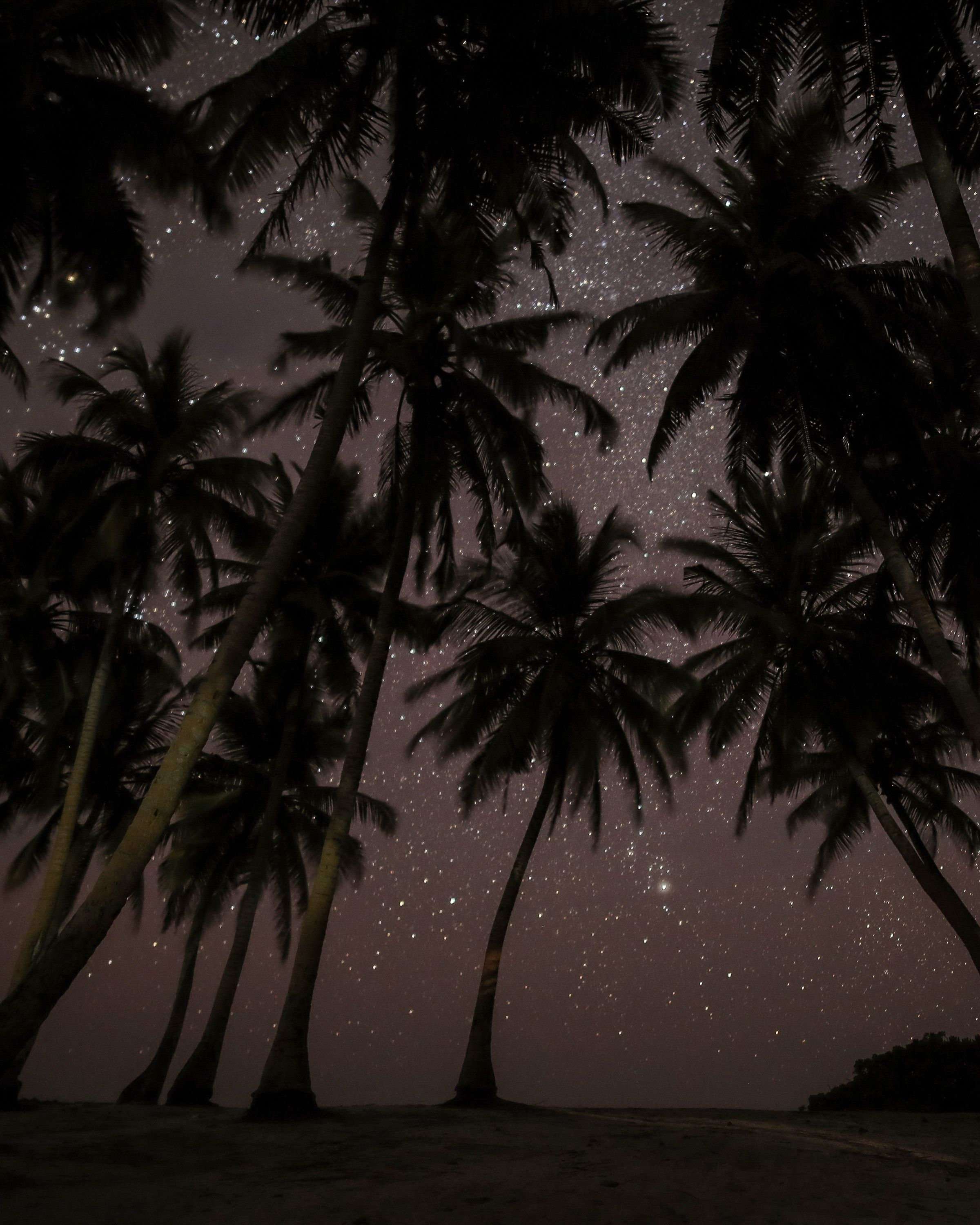 Nature Palm Night Sky Star Starry Wallpapers Hd 4k Background