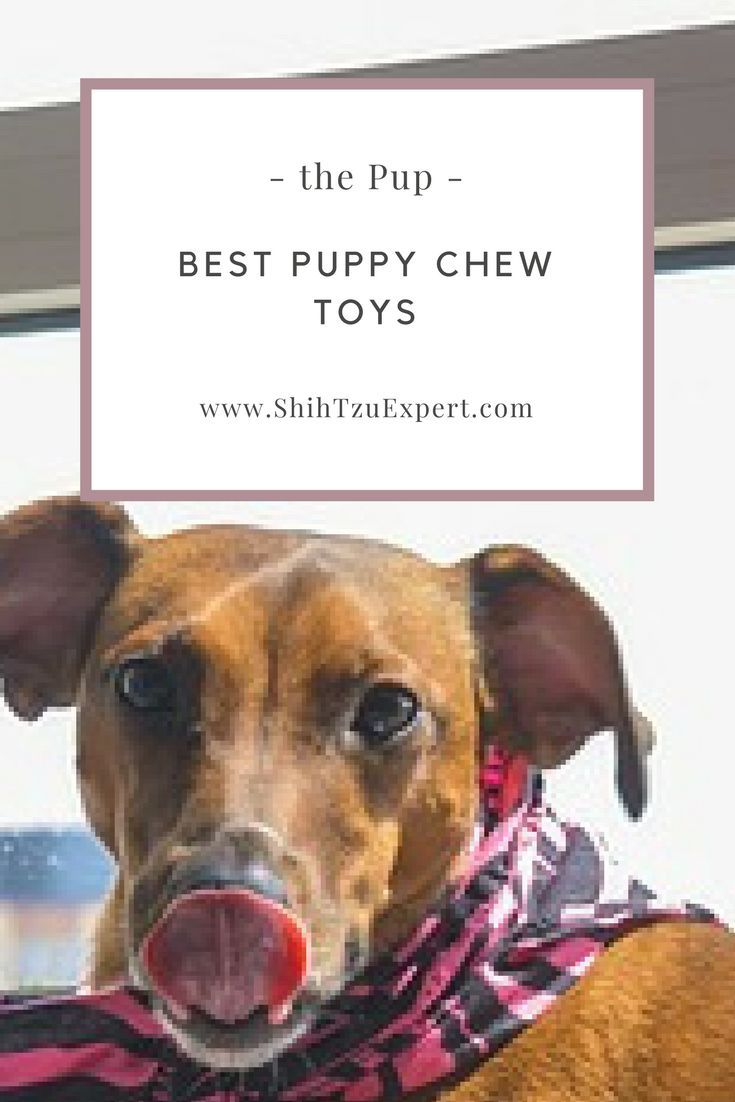 Best Puppy Chew Toys Most Popular And Safe Chew Toys For Teething