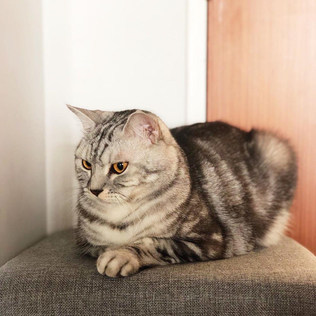 Pin On Catsofworld