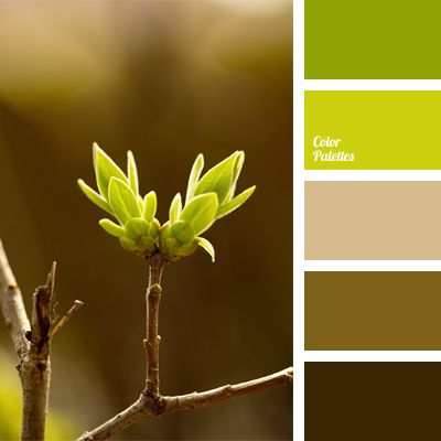 Color Palette No 570