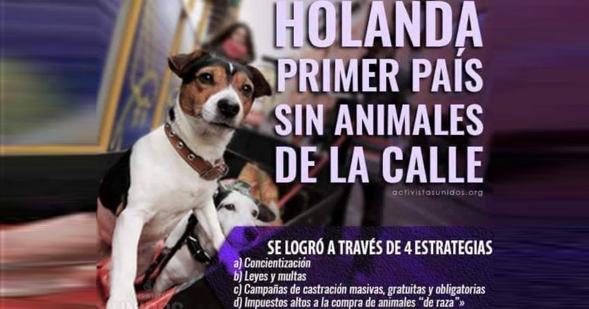 Acabemos con el maltrato animal en España