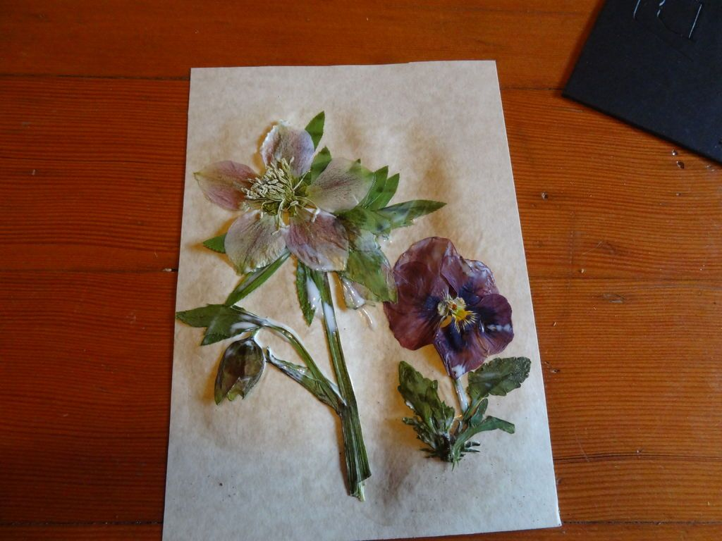 Framed Pressed Flowers *with Mod Podge Pressed flowers