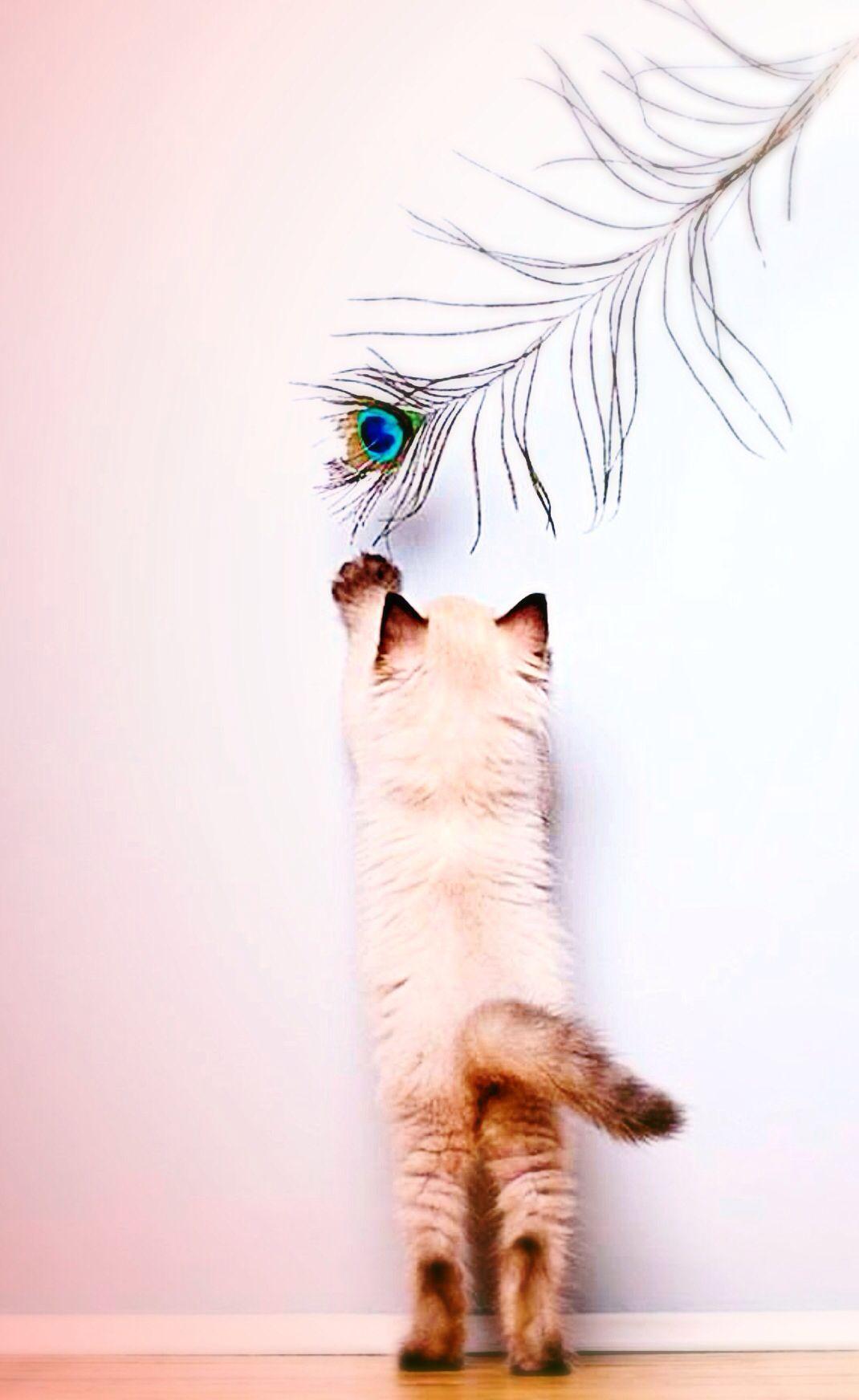 Aww… so cute! Kitten that I edited!