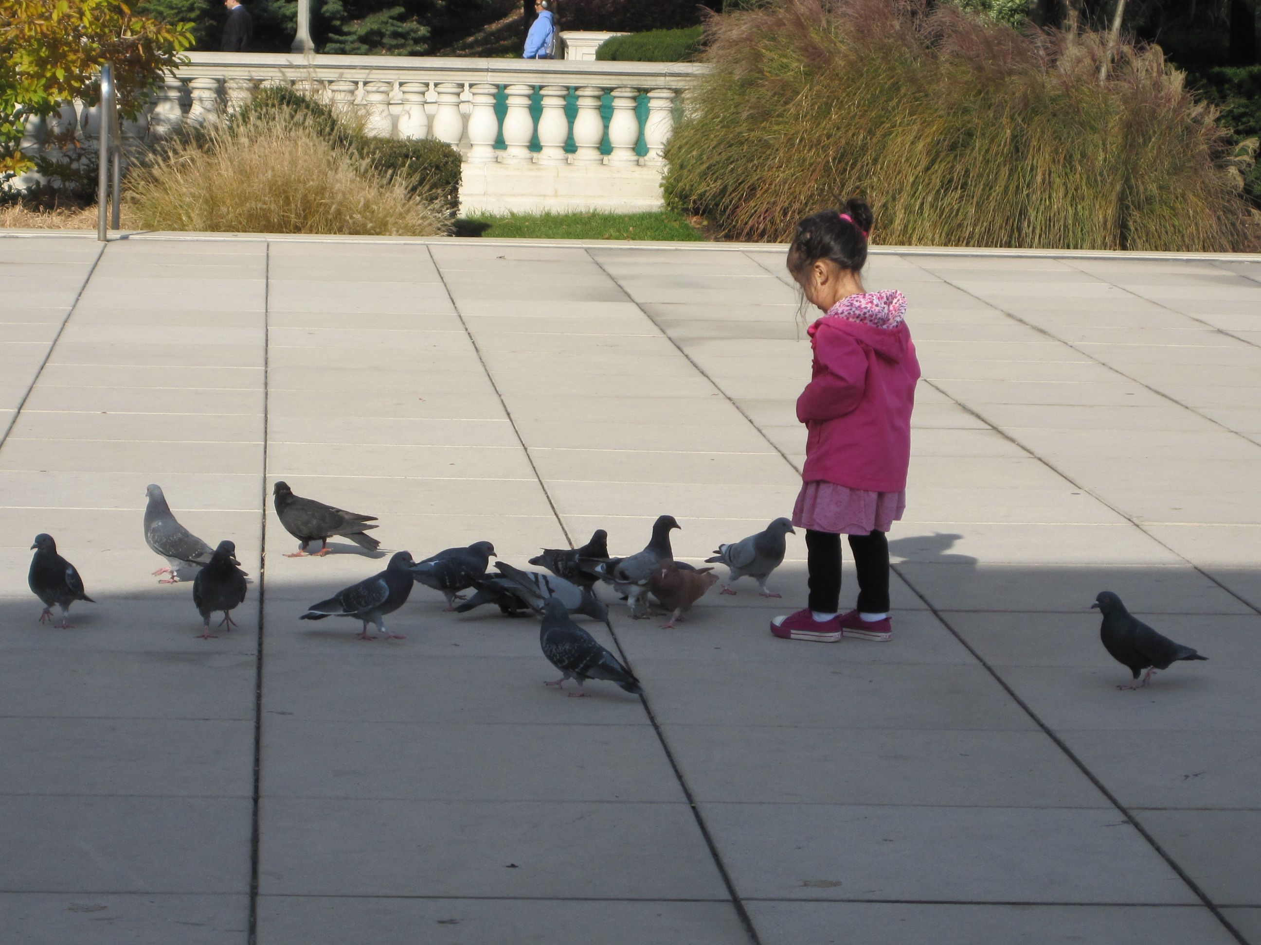 Cute little girl feeding the pigeons in Chicago
