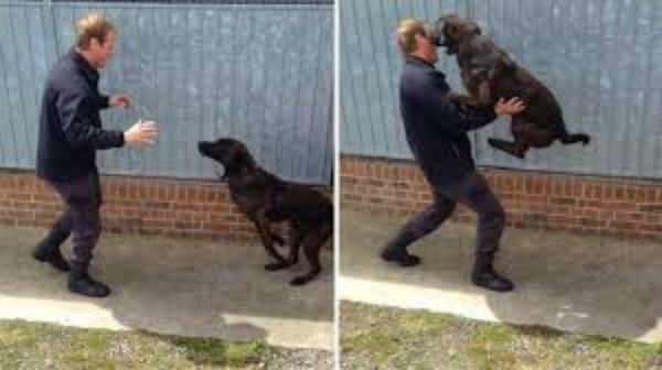 Police dogs go into happy frenzy when reunited with their handler