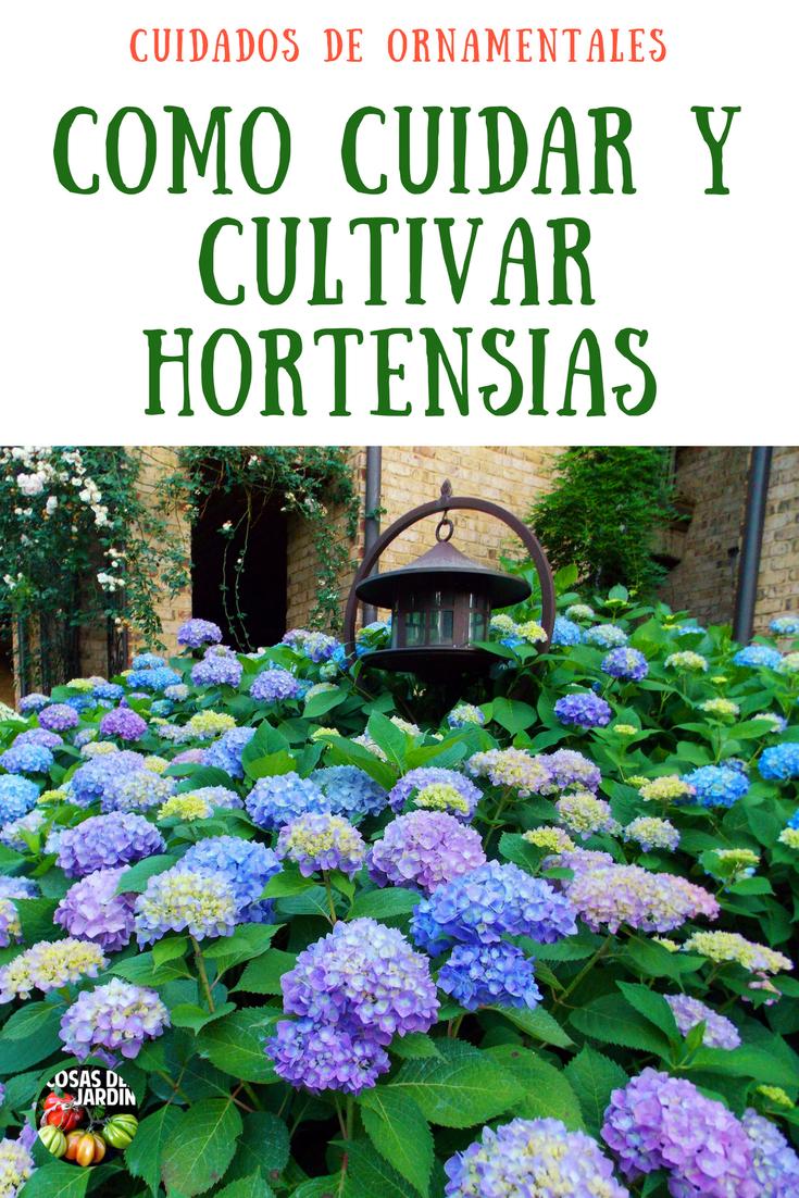 Cultivo De Hortensias Guia Para El Cuidado De Las Hortensias - Hortensias-cuidados-poda