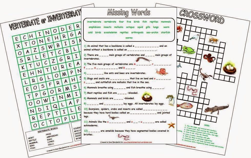Imans Home School Animal Classification Worksheets Homeschooling