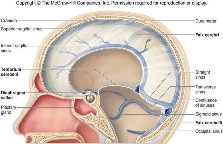 Dural Venous Sinus Google Search Neuroanatomy Pinterest