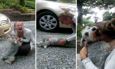 Little Dog Passes Out From Overwhelming Joy When Reunited With - Dog passes owner returns 2 years