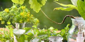 Ein Überblick über die Entwicklung der Pflanzenheilkunde