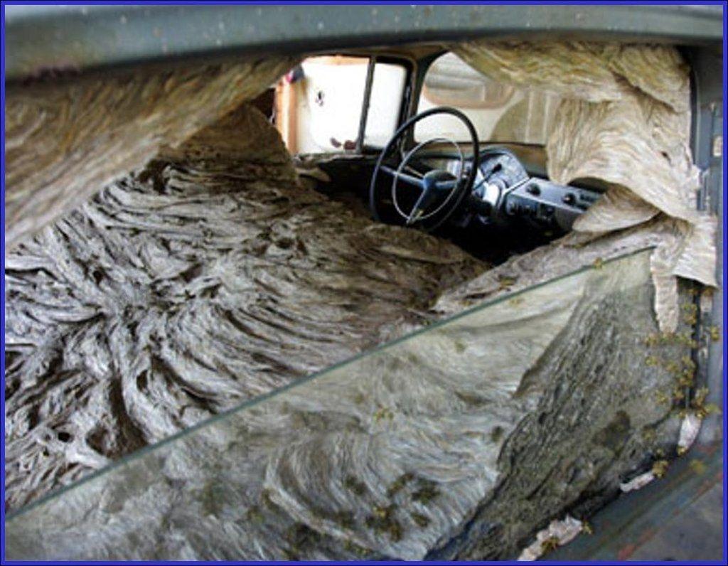 Wasp nest inside of a car Wasp nest, Wasp, Weird