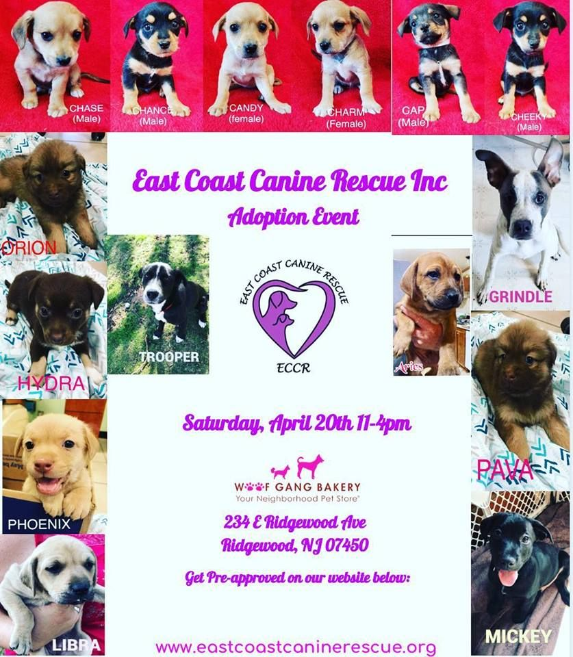 We Are So Excited To Have Our Friends From East Coast Canine Rescue And All Of These Beautiful Available Puppies At Our Store Next S Canine East Coast Adoption