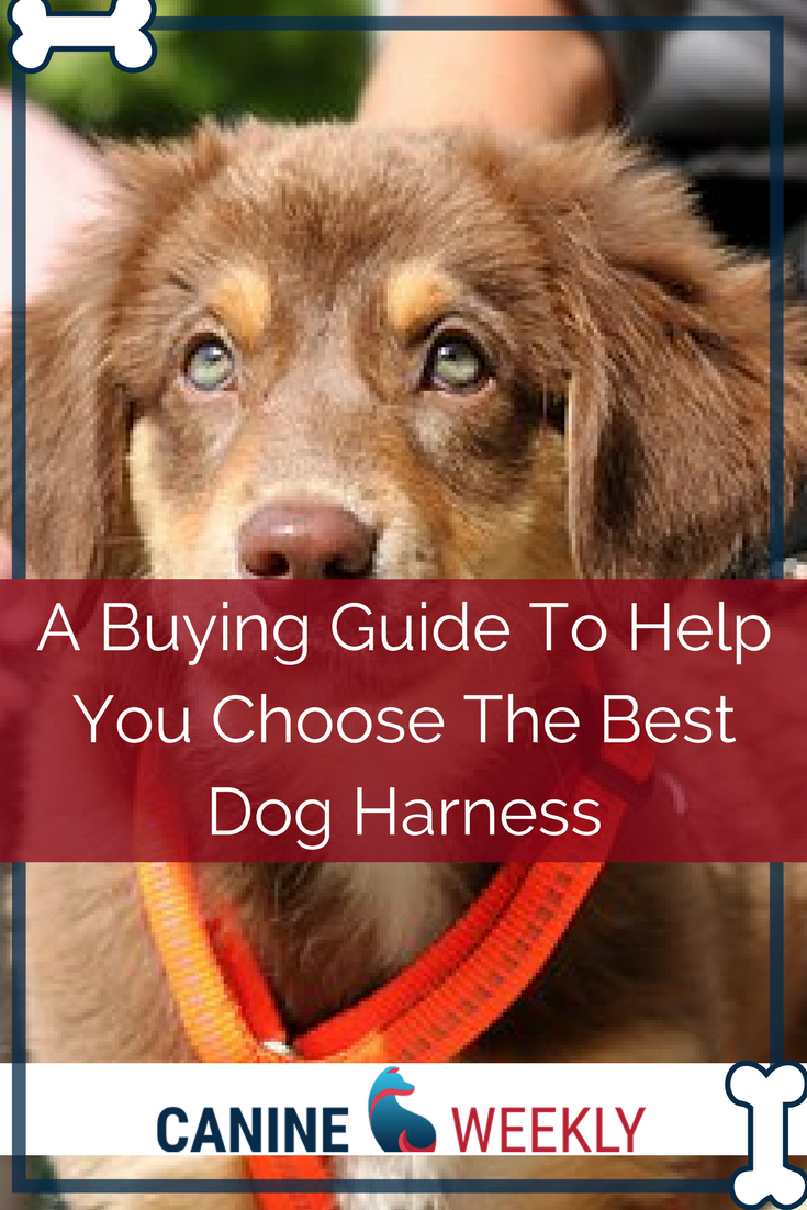 5 Best Large Dog Harnesses to Stop Pulling (2020 Reviews