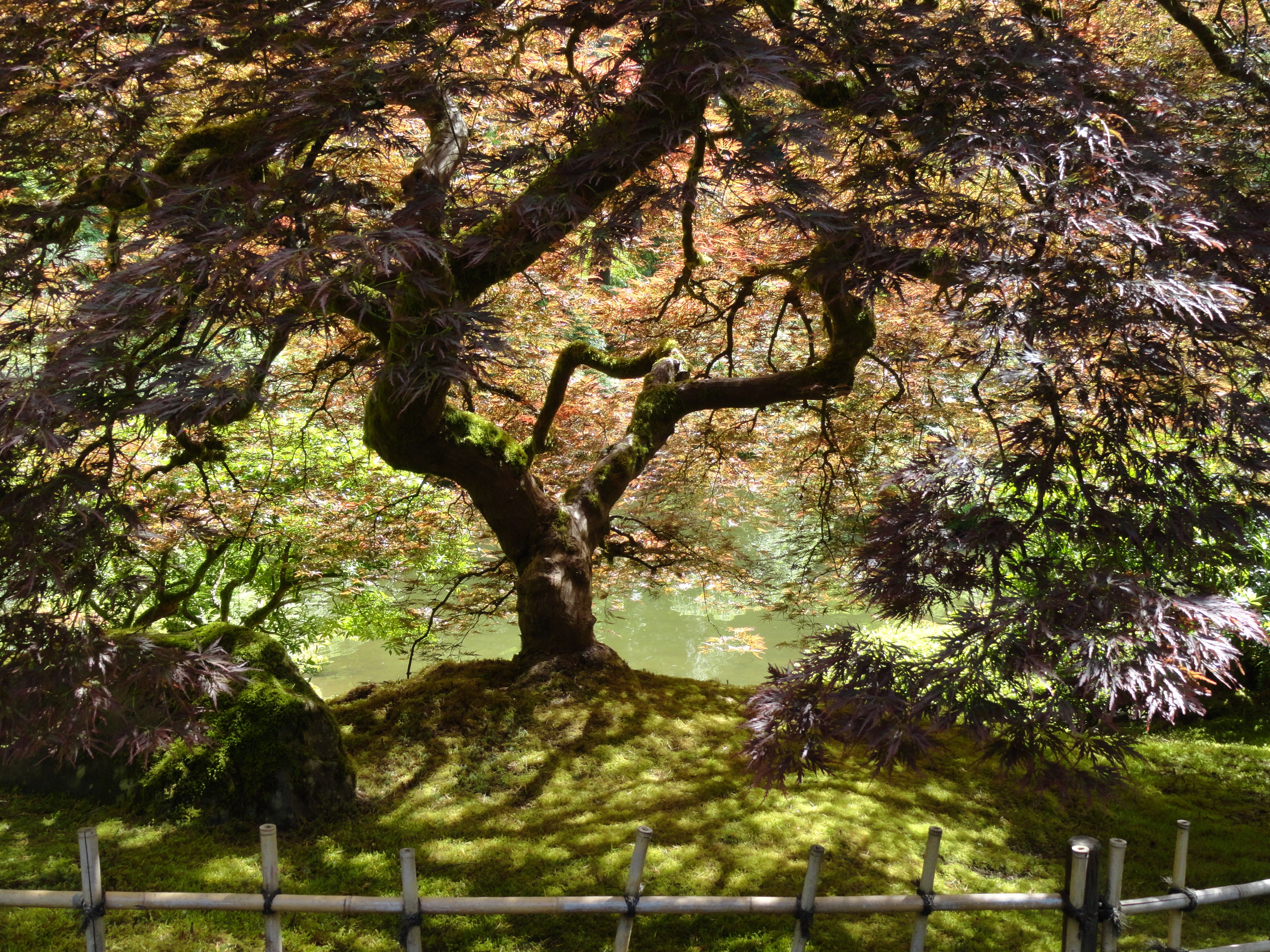 At Portland\'s Japanese Garden | A picture I took | Pinterest