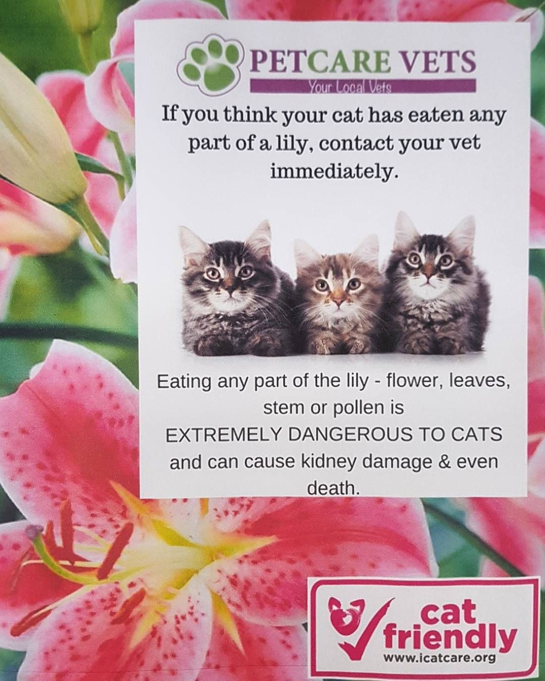 Cat Owners Please Note Lilies Are Extremely Dangerous To Your Cat