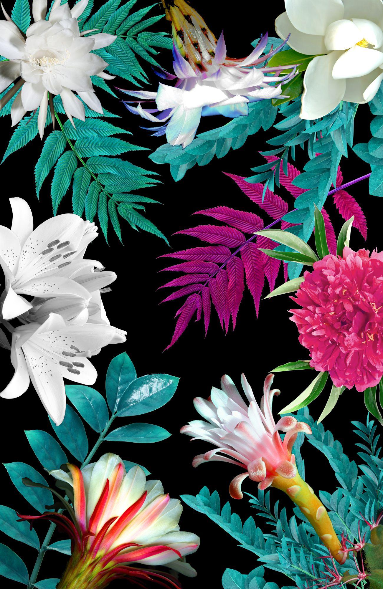 Floral Botanic By Karen Hofstetter Www Karenhofstetter Com