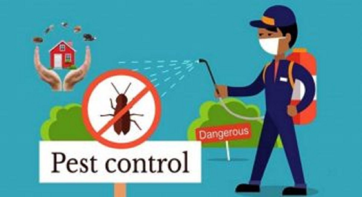 Rodent Pest Control Termite Control Best Pest Control Pest Control Services