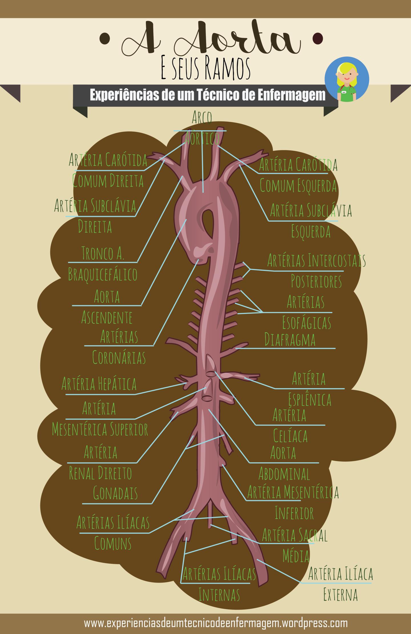 A Aorta e seus ramos en 2018 | Medical | Pinterest | Medicina ...